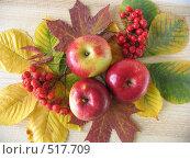 Купить «Яблоки и рябина на осенних листьях», фото № 517709, снято 13 октября 2008 г. (c) Елена Завитаева / Фотобанк Лори