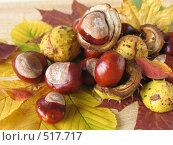 Купить «Дикие каштаны», фото № 517717, снято 13 октября 2008 г. (c) Елена Завитаева / Фотобанк Лори