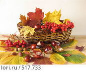 Купить «Дары осени в корзинке», фото № 517733, снято 13 октября 2008 г. (c) Елена Завитаева / Фотобанк Лори