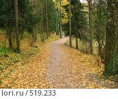 Купить «Осень в Павловском парке», фото № 519233, снято 11 октября 2008 г. (c) Светлана Кудрина / Фотобанк Лори