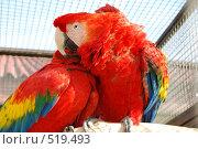 Купить «Объятия попугая», фото № 519493, снято 9 июня 2007 г. (c) Мария Левочкина / Фотобанк Лори