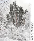 Зимний Валдай (2007 год). Редакционное фото, фотограф Карасева Елена / Фотобанк Лори