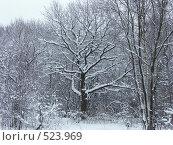 Купить «Зимняя сказка», фото № 523969, снято 7 декабря 2004 г. (c) Сергей Бехтерев / Фотобанк Лори