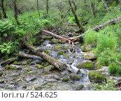 Лесной ручей. Стоковое фото, фотограф Елена Чердынцева / Фотобанк Лори