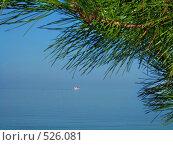 Купить «Туристический корабль в море на фоне сосновой ветки», фото № 526081, снято 9 сентября 2008 г. (c) Fro / Фотобанк Лори