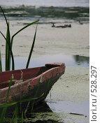 Нос лодки в воде у берега. Стоковое фото, фотограф Татьяна Князева / Фотобанк Лори