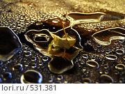 Купить «Листочек и капельки», фото № 531381, снято 14 января 2008 г. (c) Барабанов Максим Олегович / Фотобанк Лори