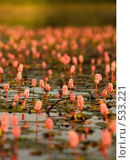 Купить «Водные цветы», фото № 533221, снято 5 августа 2007 г. (c) Николаев Евгений / Фотобанк Лори