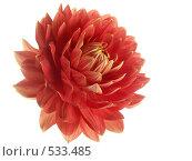 Купить «Цветок красного георгина в профиль на белом фоне», фото № 533485, снято 14 сентября 2008 г. (c) Александр Кузовлев / Фотобанк Лори
