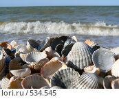 Купить «Ракушки на берегу моря», фото № 534545, снято 20 мая 2008 г. (c) Роман Мельник / Фотобанк Лори