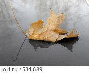 Купить «Желтый лист отражается в луже», фото № 534689, снято 20 октября 2007 г. (c) Квитченко Лев / Фотобанк Лори