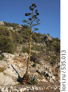 Неприхотливое дерево. Стоковое фото, фотограф Алексей Зарубин / Фотобанк Лори