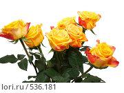 Желтые розы. Стоковое фото, фотограф Алексей Хабазов / Фотобанк Лори