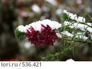 Купить «Первый снег», фото № 536421, снято 14 ноября 2007 г. (c) Людмила Травина / Фотобанк Лори