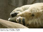 Купить «Белый медведь», фото № 536729, снято 7 сентября 2008 г. (c) Asja Sirova / Фотобанк Лори