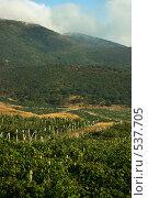 Виноградник на фоне гор Крым (2008 год). Стоковое фото, фотограф Сергей Литвиненко / Фотобанк Лори