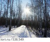 Зимнее солнце. Стоковое фото, фотограф Нина Галкина / Фотобанк Лори