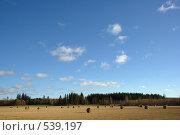 Убранное поле со тюками сена, солнечно. Стоковое фото, фотограф Алексей Семенов / Фотобанк Лори