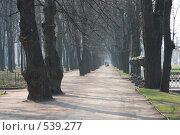 Купить «Прогулка в Летнем саду», фото № 539277, снято 6 мая 2006 г. (c) Инга Лексина / Фотобанк Лори