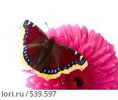 Купить «Бабочка на цветке», фото № 539597, снято 5 сентября 2008 г. (c) podfoto / Фотобанк Лори