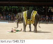 Купить «Слон», фото № 540721, снято 21 ноября 2018 г. (c) Zlataya / Фотобанк Лори