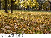 Купить «Осень пришла», фото № 544613, снято 9 октября 2008 г. (c) Андрюхина Анастасия / Фотобанк Лори