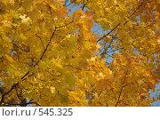 Осень золотая. Стоковое фото, фотограф Власов Виктор Валентинович / Фотобанк Лори