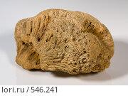 Купить «Окаменевшая кость», фото № 546241, снято 25 октября 2008 г. (c) Андрей Короткевич / Фотобанк Лори