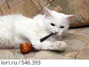 Купить «Кот с курительной трубкой», фото № 546393, снято 16 октября 2008 г. (c) Михаил Коханчиков / Фотобанк Лори