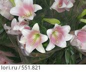 Купить «Цветы», фото № 551821, снято 10 июня 2008 г. (c) Виктор  Батавин / Фотобанк Лори