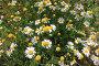 Цветы, эксклюзивное фото № 553825, снято 12 августа 2008 г. (c) Дмитрий Неумоин / Фотобанк Лори