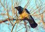 Ворона на ветке, фото № 554857, снято 8 ноября 2008 г. (c) Сергей Лаврентьев / Фотобанк Лори