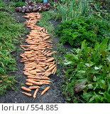 Морковная дорожка. Стоковое фото, фотограф Нина Галкина / Фотобанк Лори