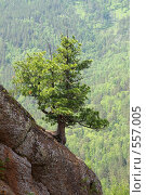 И на камнях деревья растут. Стоковое фото, фотограф Сергей Зоммер / Фотобанк Лори
