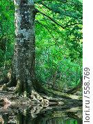 Купить «Старая одинокая береза», фото № 558769, снято 25 августа 2008 г. (c) Сергей Литвиненко / Фотобанк Лори