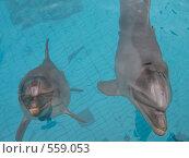 Дельфины. Стоковое фото, фотограф Ирина Китаева / Фотобанк Лори