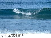 Купить «Волна», фото № 559817, снято 30 июня 2008 г. (c) Наталья Герасимова / Фотобанк Лори