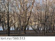 Купить «Ноябрь», фото № 560513, снято 12 ноября 2008 г. (c) Максим Кузнецов / Фотобанк Лори