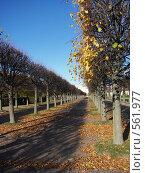 Купить «В Петергофе», фото № 561977, снято 8 октября 2008 г. (c) Александр Михалёв / Фотобанк Лори