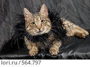 Купить «Кошка в боа», фото № 564797, снято 13 марта 2008 г. (c) Ольга Герасимова / Фотобанк Лори