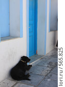Купить «Греция, остров Санторини, собака у дома», эксклюзивное фото № 565825, снято 11 августа 2008 г. (c) Яна Королёва / Фотобанк Лори