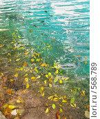 Купить «Осенние упавшие листься на Плитвицком озере, Хорватия», фото № 568789, снято 19 августа 2019 г. (c) Fro / Фотобанк Лори