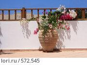Купить «Большой горшок с цветком на балконе», эксклюзивное фото № 572545, снято 4 августа 2008 г. (c) Яна Королёва / Фотобанк Лори
