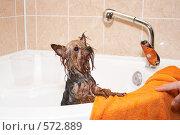 Купить «Собака в салоне красоты», эксклюзивное фото № 572889, снято 14 февраля 2007 г. (c) Ирина Мойсеева / Фотобанк Лори