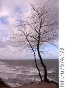 Купить «На краю», эксклюзивное фото № 574173, снято 16 ноября 2008 г. (c) Svet / Фотобанк Лори