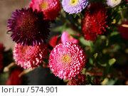 Купить «Астры», фото № 574901, снято 2 октября 2007 г. (c) Gagara / Фотобанк Лори