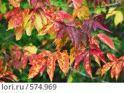 Разноцветие. Стоковое фото, фотограф vlntn / Фотобанк Лори