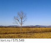 Купить «Одинокое дерево в осенних лугах», фото № 575549, снято 9 ноября 2008 г. (c) Олег Рубик / Фотобанк Лори
