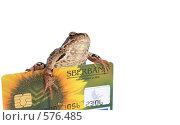 Купить «Лягушка держит банковскую карточку Сбербанка», фото № 576485, снято 7 июля 2007 г. (c) Cветлана Гладкова / Фотобанк Лори