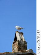Чайка. Стоковое фото, фотограф Юлия Медведева / Фотобанк Лори